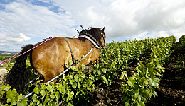 philipponnat-chevalMKB_0085_1348.jpg